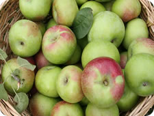 davison quality foods bramley apple products
